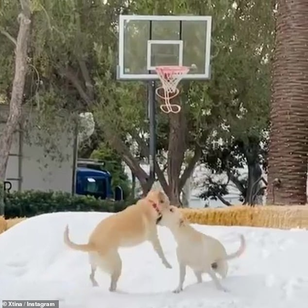 Puppy Love: Christina also shared a clip of Yellow Lab cubs Mowgli and Palo running and playing in what was likely their first snow