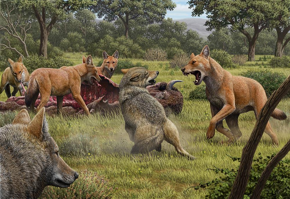 Wolves from Game of Thrones were real, but became extinct due to this amazing reason