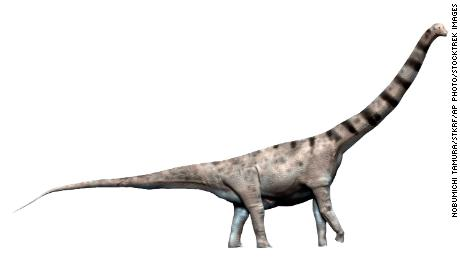 The newly discovered dinosaur is believed to have a body mass greater than or comparable to that of Argentinosaurus, which measures up to 40 meters and weighs up to 110 tons.