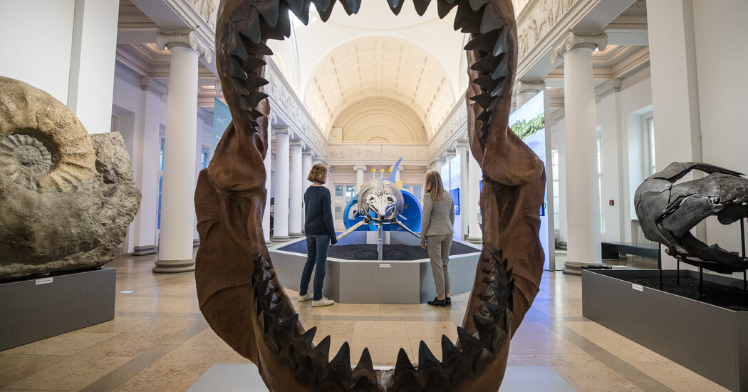 The study indicates that young megalodons were cannibals 6 feet tall